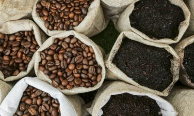 Coffee Beans—The Starting Point of the Delicious Coffee