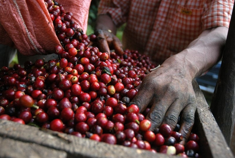 South American Coffees